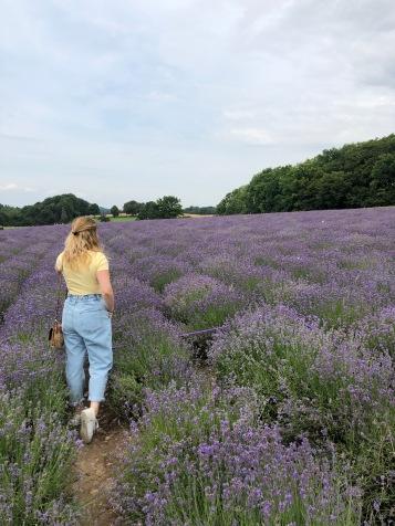 Lavendel Fields Fromhausen